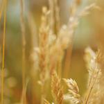 Hochbeet – Erstbepflanzung und Nitrat
