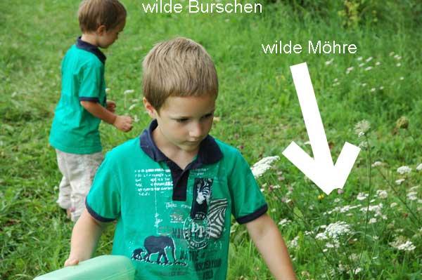 auf der Suche nach Schwalbenschwanzraupe. Vor allem findet man sie auf der wilden Möhre, häufig auch im Gartenbeet.